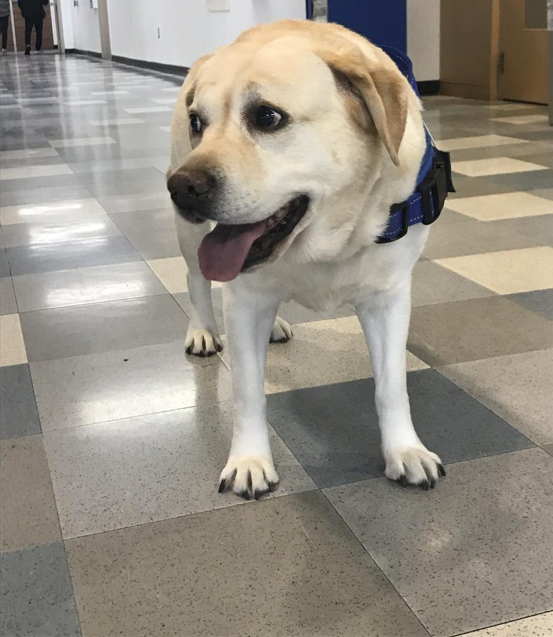 Syrena Miller stands in main hall, Syrena trained for a year to earn her service dog status.